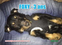FOXY modif 03