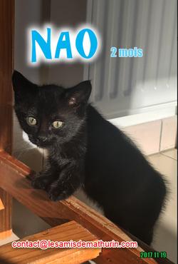 NAO 04