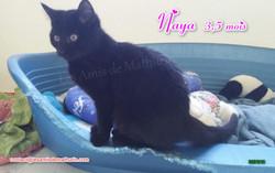 NAYA 05