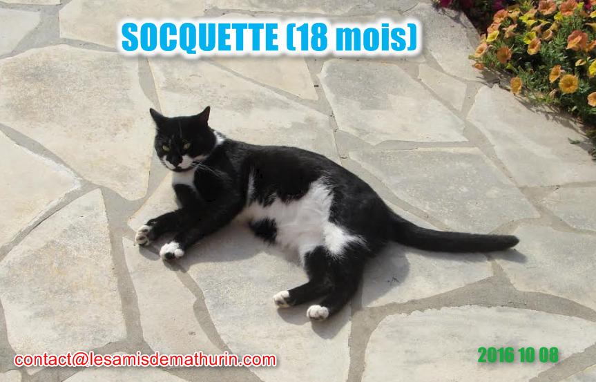 Socquette Modif3