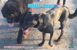 DARKOS LAM 03