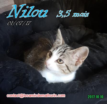 NILOU 01