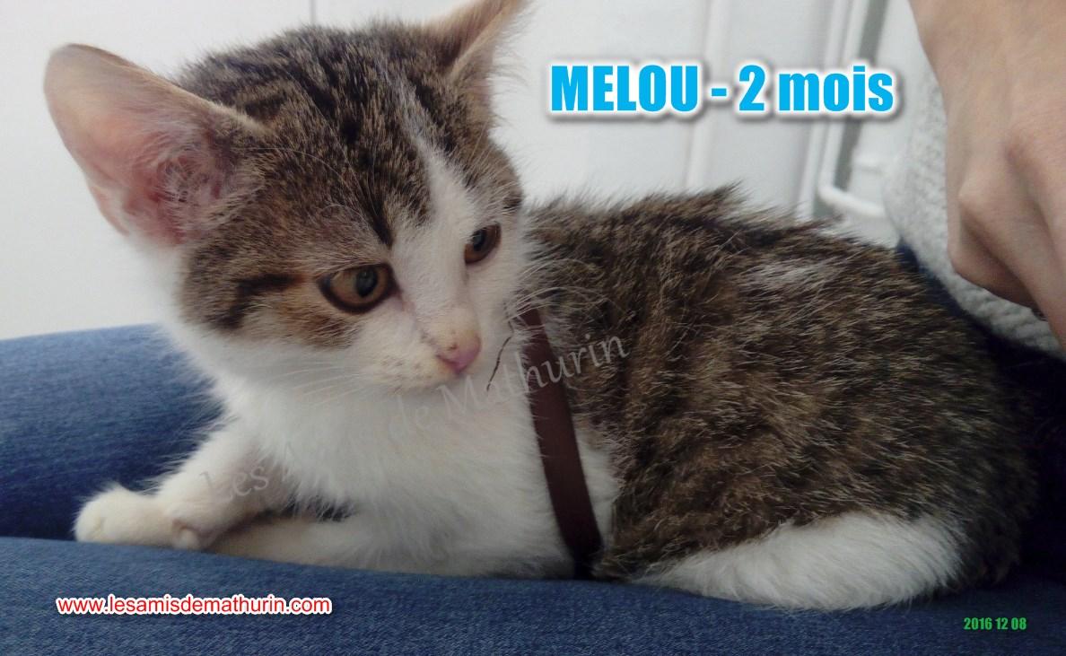 MELOU 03