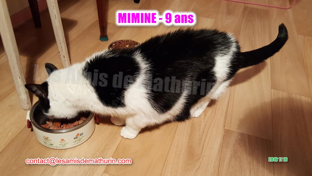 MIMINE modif 02