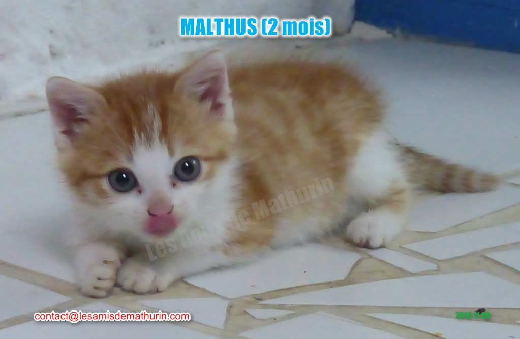 MALTHUS modif 02