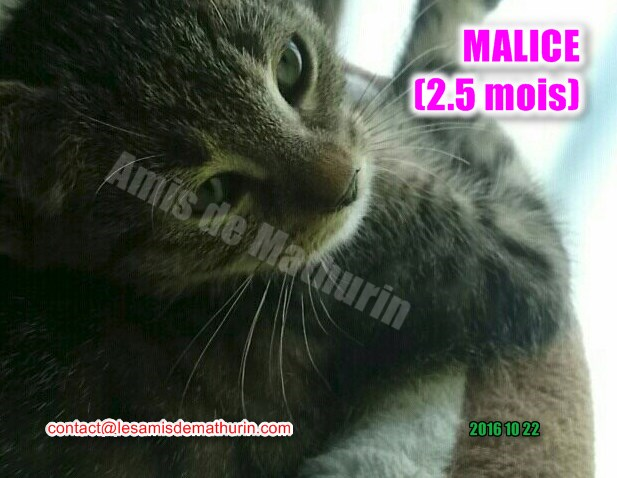 Malice 02