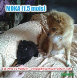 MOKA avec la chienne de la FA