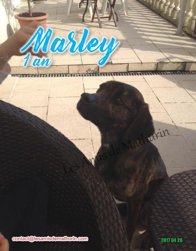 MARLEY 01