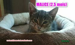Malice 01