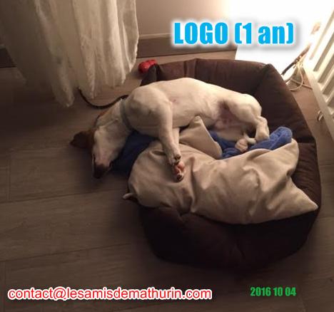 LOGO modif 2
