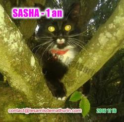 SASHA modif 02