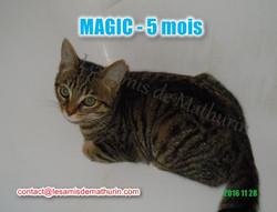 MAGIC modif 01