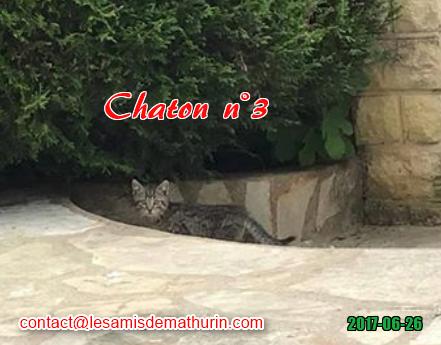 Chaton 03