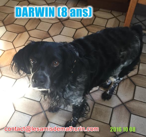DARWIN modif3