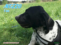 MEZZO 02