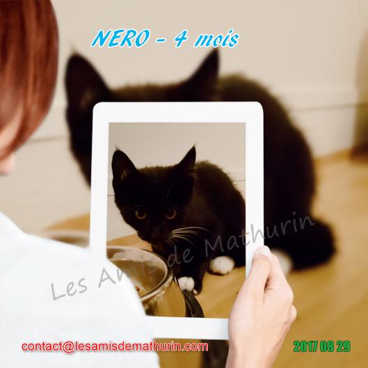 LAM NERO 01