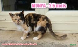 MUNYA modif1