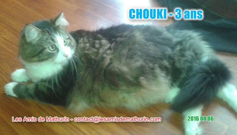 Chouki modif 3