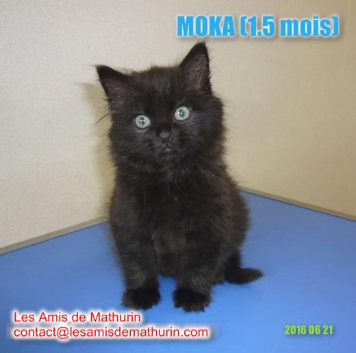 MOKA 5