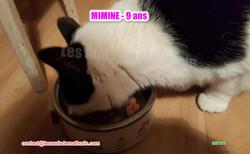 MIMINE modif 03