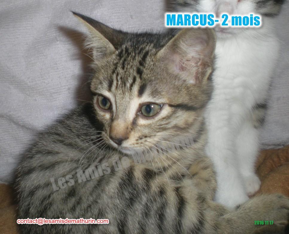 MARCUS modif 04