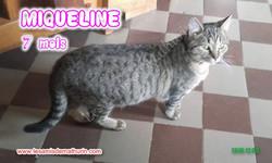 MIQUELINE modif 02
