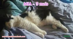 MIA 02