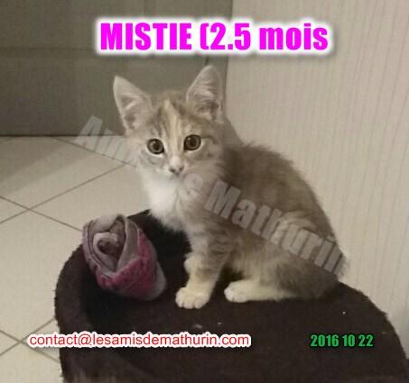 MISTIE Villecresnes 02