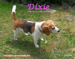 DIXIE 02