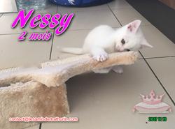 NESSY 04