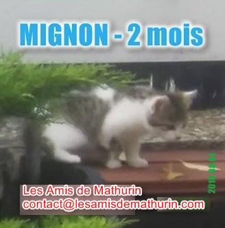 MIGNON 1 modif