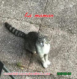 Chatte 02