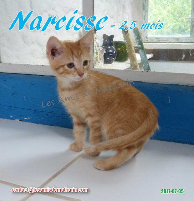 NARCISSE 01