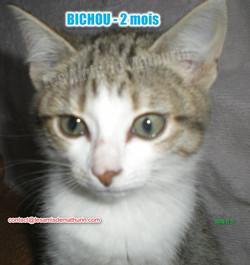BICHOU modif 03