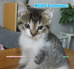 MEEKO modif 04