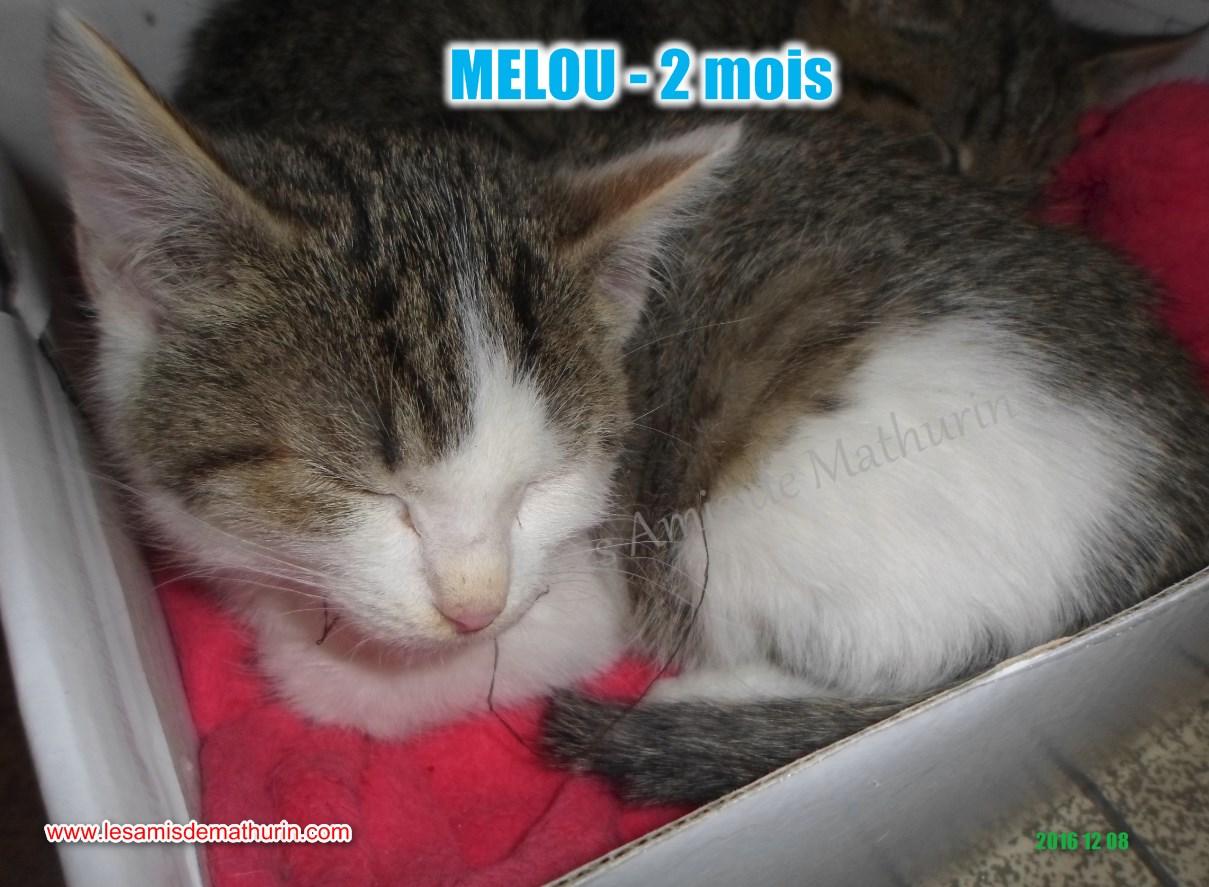 MELOU 06