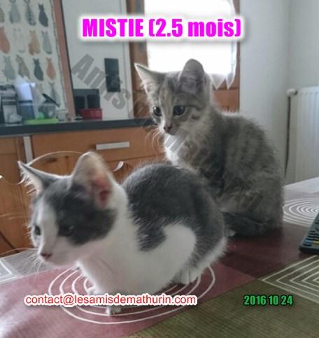 MISTIE Villecresnes 06