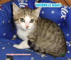 BICHOU modif 02