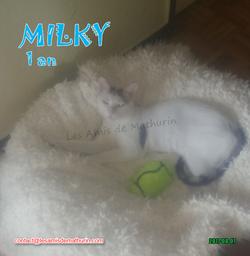 MILKY 05