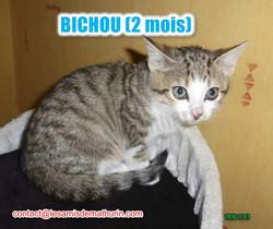 BICHOU modif 04