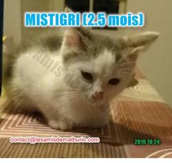 Mistigri 04