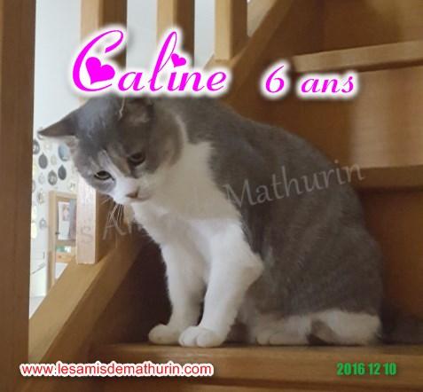 CALINE modif 12