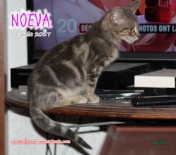 NOEVA 02