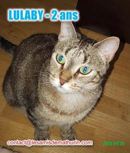 lulaby 6