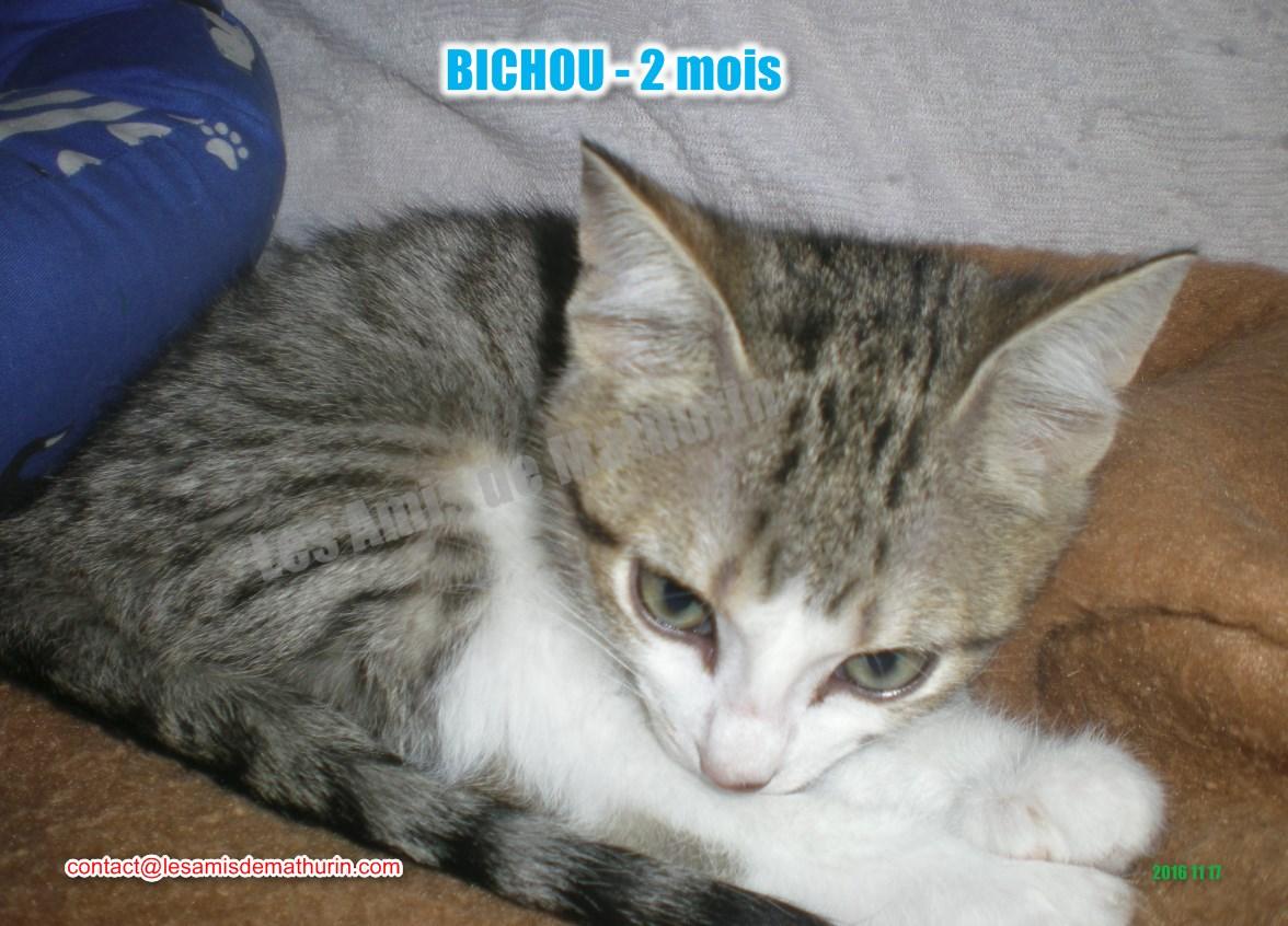 BICHOU modif 06