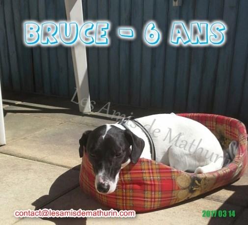 BRUCE 01
