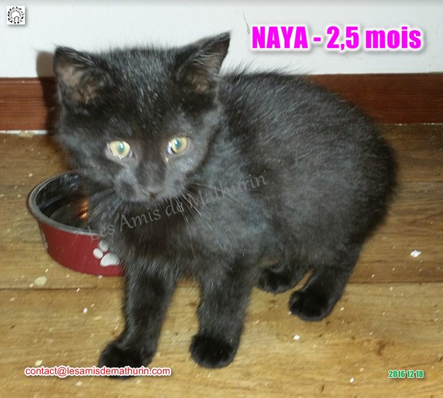 NAYA modif 01