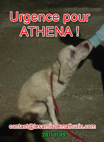 ATHENA 04
