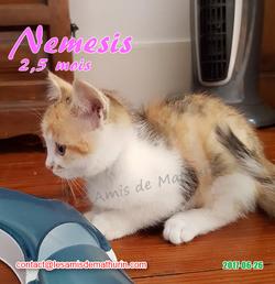 Nemesis 03