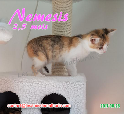 Nemesis 02